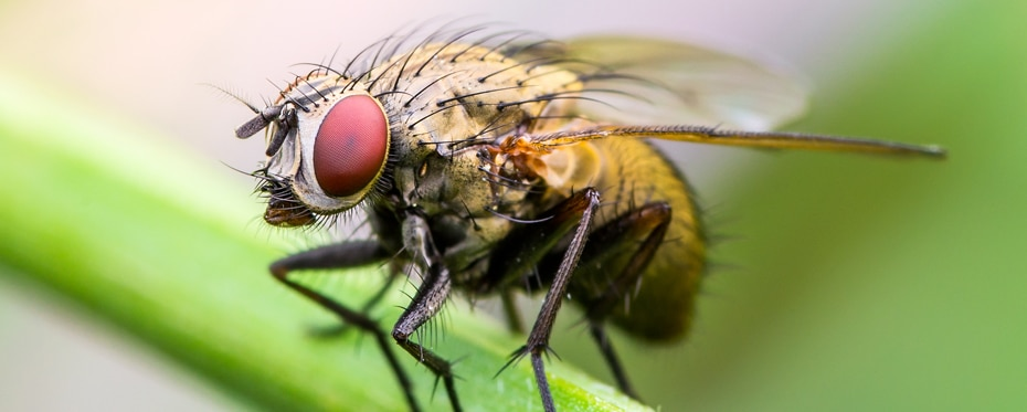 Fruit flies help shed light on drug discovery for ALS