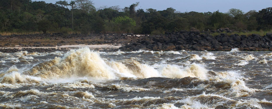 Fishes in the lower Congo River An extreme case of species divergence and convergent evolution