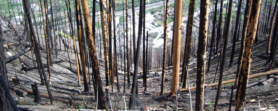 Disturbances calls for disaster: Why forest fires increase landslides and rockfall hazards