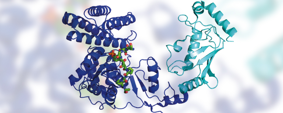 How ubiquitin determines the fate of our proteins