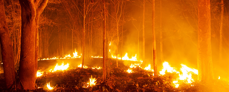 Natural disturbances like wildfires have a positive effect on species composition.
