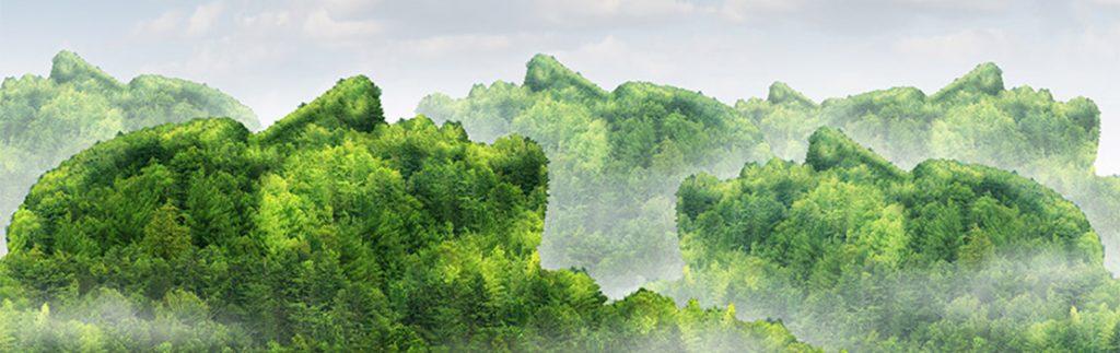 Treetops look like faces beneath a cloudy sky
