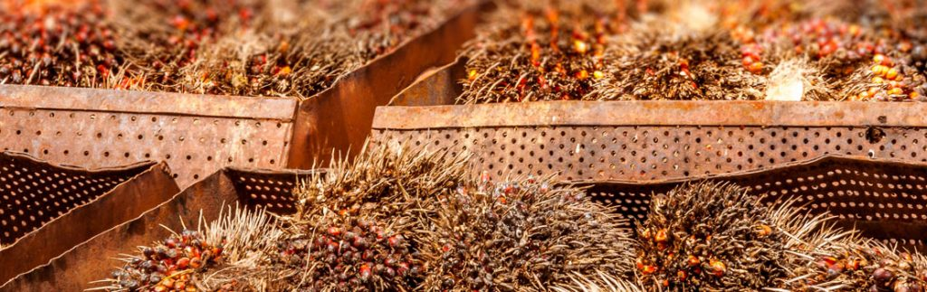 sustainable method of sourcing palm oil