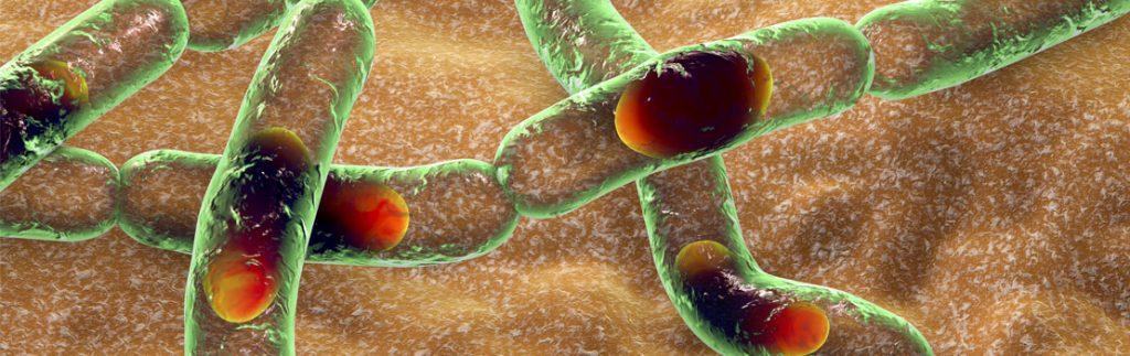 structure of glycogen