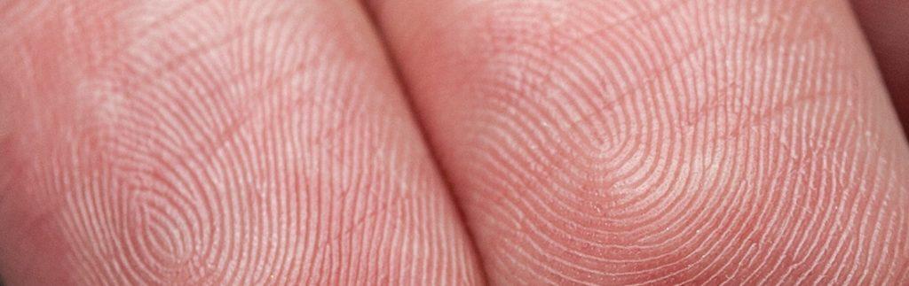 Moisture regulation in finger pad ridges can ensure optimal grip